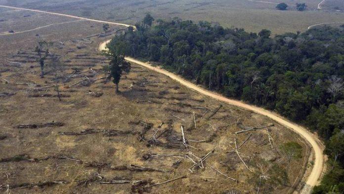 Bosque Tropical pierde capacidad para absorber carbon o