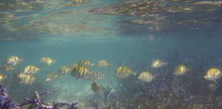 arrecifes de coralç