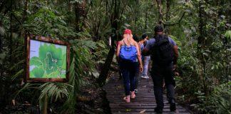 Discovery Center Rainforest